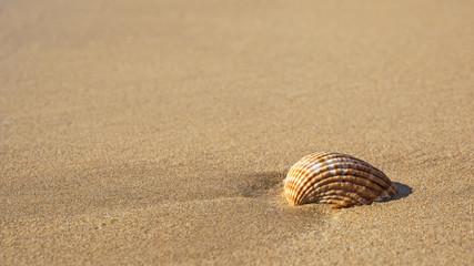 Strandurlaub - Sommerurlaub - Strand - Urlaubsreise - Tourismus