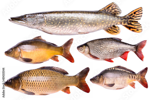 Set fresh raw fish isolated,  clipping path - 81430544
