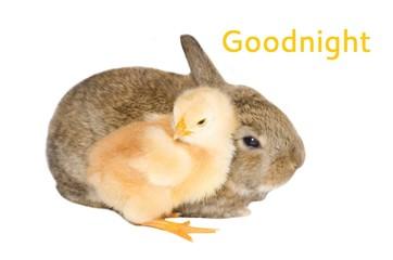 Cartolina della buonanotte