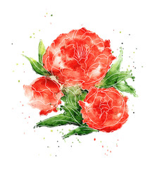 Vector illustration - watercolor flowers peonies