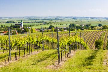 vineyard near Unterretzbach, Lower Austria, Austria