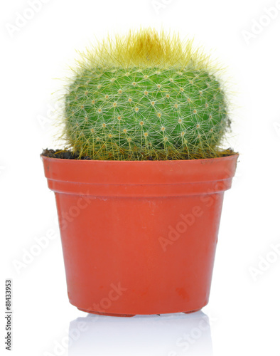 Staande foto Cactus Potted green cactus isolated on white background