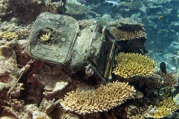 luggage underwater on corals