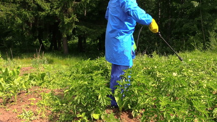 man protect potato garden using agricultural pesticide sprayer