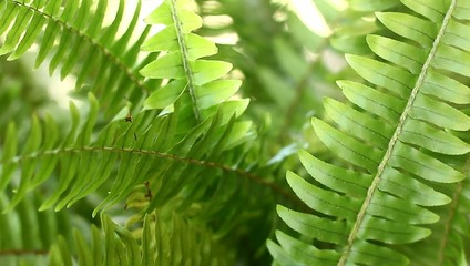 fern stems in the wind