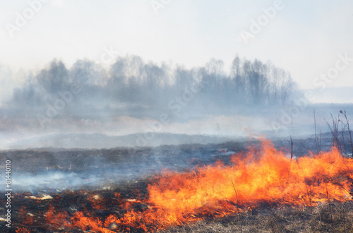 Leinwanddruck Bild Forest fire: the burning last year's dry grass against the wood