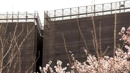 桜と工事中のマンション