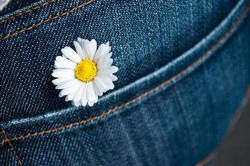 pâquerette dans la poche arrière d'un jean