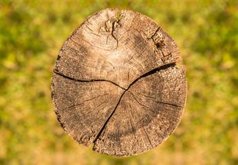 Baumstamm Holz