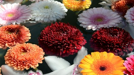 Bunte Blumen im Wasser