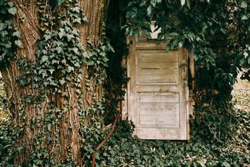 Grunge old door near tree