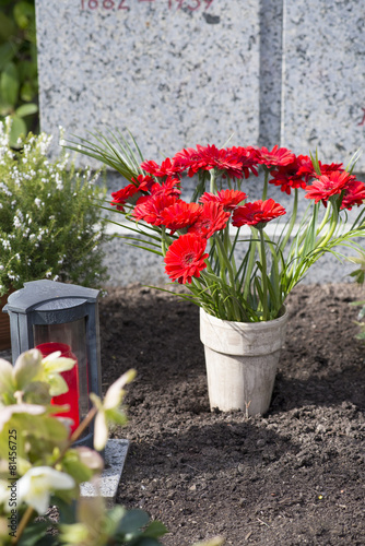 Rote Gerbera und Grablicht - 81456725