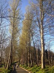 walking tall tree park