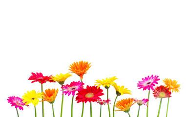 bunte Blumen freigestellt