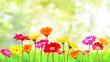 Leinwanddruck Bild - Natur Blumen