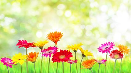 Natur Blumen