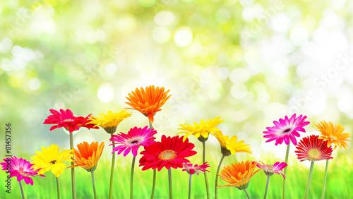 Foto op Canvas Tuin Natur Blumen