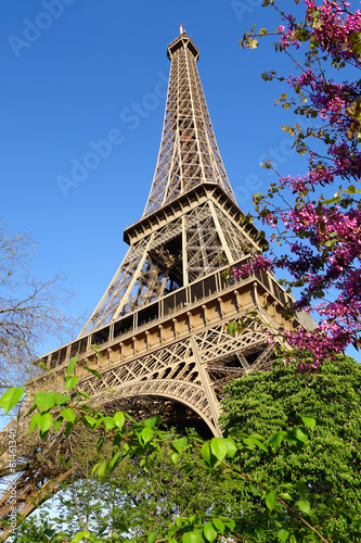 Eiffel Tower with spring tree in Paris, France © samott
