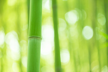 Bamboo forest, bamboo forest in China has special cultural symbo