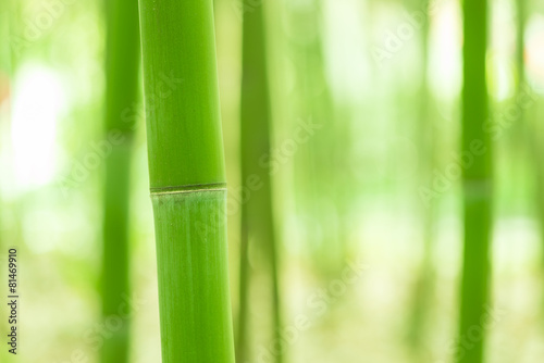 In de dag Bamboo Bamboo forest, bamboo forest in China has special cultural symbo