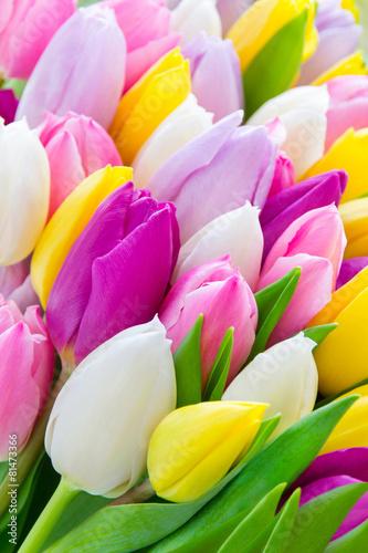 Foto op Canvas Tulp Tulpen