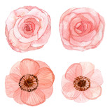 Set of flowers watercolor drawing