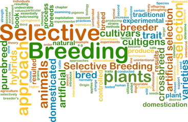 selective breeding wordcloud concept illustration