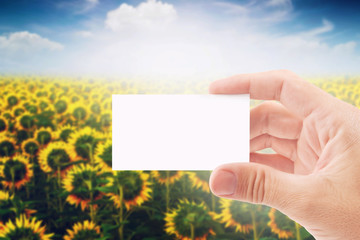 Agricultural Farmer Holding Blank Business Card in Sunflower Fie