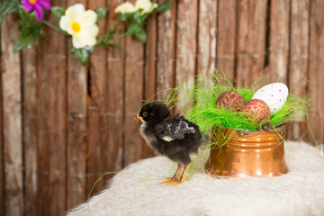 Easter eggs in copper bowl and baby chicken