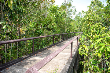 Pathway in mangrove forest