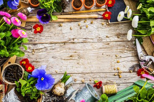 Ogrodowi narzędzia, kwiaty i ziarna na drewnianym tle, rama