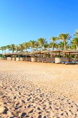 Row of wattled straw umbrellas on sunny beach. Egypt. Sharm-el-s
