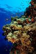 Coral reef - 81486598
