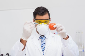 Scientist doing injection to tomato
