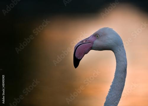 Foto op Aluminium Flamingo Profile of flamingo