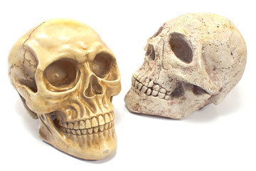 Two human skulls isolated on white