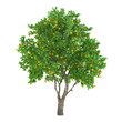 Citrus fruit tree isolated. lemon - 81497916