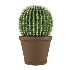 Plant isolated. Cactus grusoni in a pot