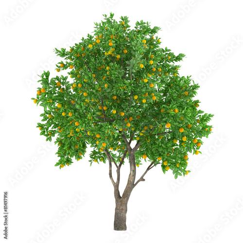 Citrus fruit tree isolated. lemon - 81497916