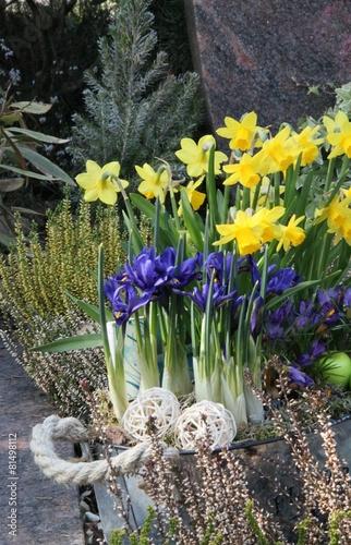 Foto op Canvas Iris Grabgestaltung im Frühling