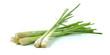 Lemon grass on white background - 81502347