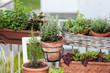Kräuter- und Gemüse am Balkon anpflanzen - 81506508