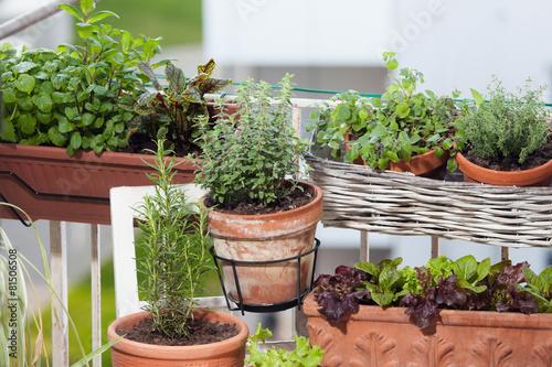 Fotobehang Planten Kräuter- und Gemüse am Balkon anpflanzen