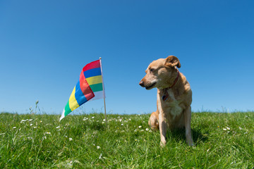 Dog laying in grass on Dutch island
