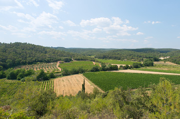 Landscape with vineyards in France