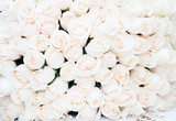 Roses, white. Background, luxury bouquet