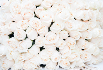 Roses, white. Background, luxury bouquet