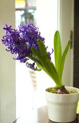 Hyacinthus Vase