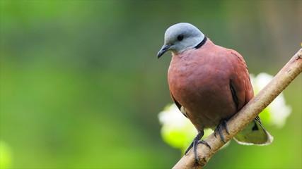 Dove on the tree