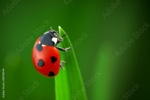 Poster Water planten Ladybug With Hearts on Back